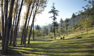 kashmir-Green-Valley